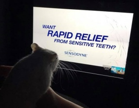 a gerbil watching a toothache pain releaf advert on iPad