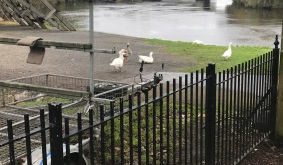 A Walk Through Glasgow Green Scotland Clubhouse Swans 1