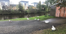 A Walk Through Glasgow Green Scotland Clubhouse Swans 2