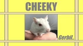 gerry the gerbil - cheeky the gerbil