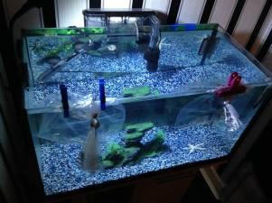 First Tank (2) (Marina 60 Aquarium)