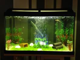 First Tank (Garden Theme) 1 (Marina 60 Aquarium)