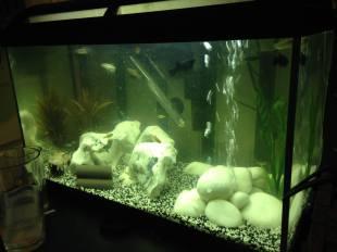First Tank (Rocks) (Marina 60 Aquarium)