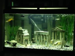 First Tank (Ruins) 1 (Marina 60 Aquarium)