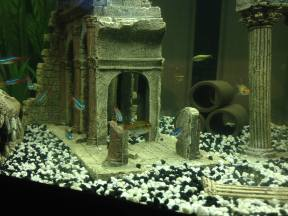 First Tank (Ruins) 2 (Marina 60 Aquarium)
