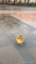 Halloween 2017 Pokémon Go Hunting Pidgey 2