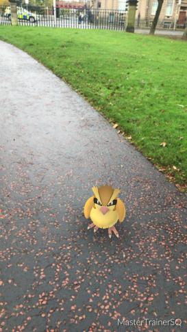 Halloween 2017 Pokémon Go Hunting Pidgey
