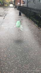 Halloween 2017 Pokémon Go Hunting Remoraid