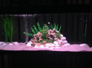 Juwel Aquarium (1)