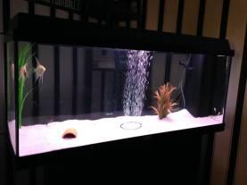 Juwel Aquarium (2)