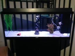 Juwel Aquarium (3)