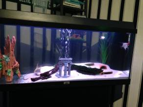 Juwel Aquarium (4)