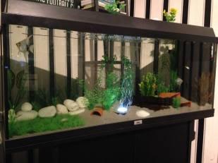 Juwel Aquarium (5)