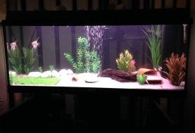 Juwel Aquarium (6)