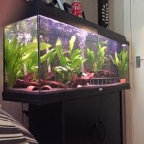 Juwel Aquarium (8)