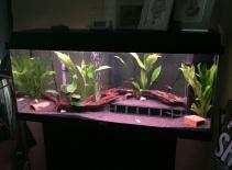 Juwel Aquarium (9)