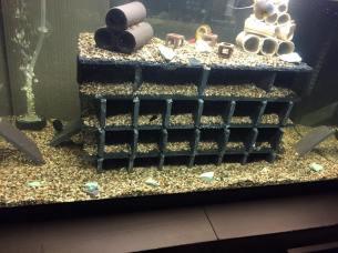 Marina Tank