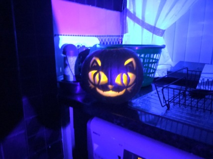 My Halloween Pumpkin Designs Cat