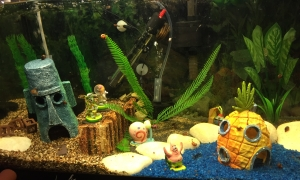 Marina 60 Spongebob Squarepants Theme Aquarium
