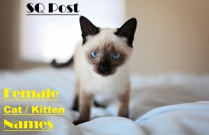 Female Kitten Cat Names Image