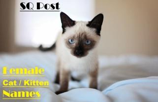 Female Kitten Cat Names Image