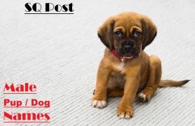 Female Puppy Dog Names