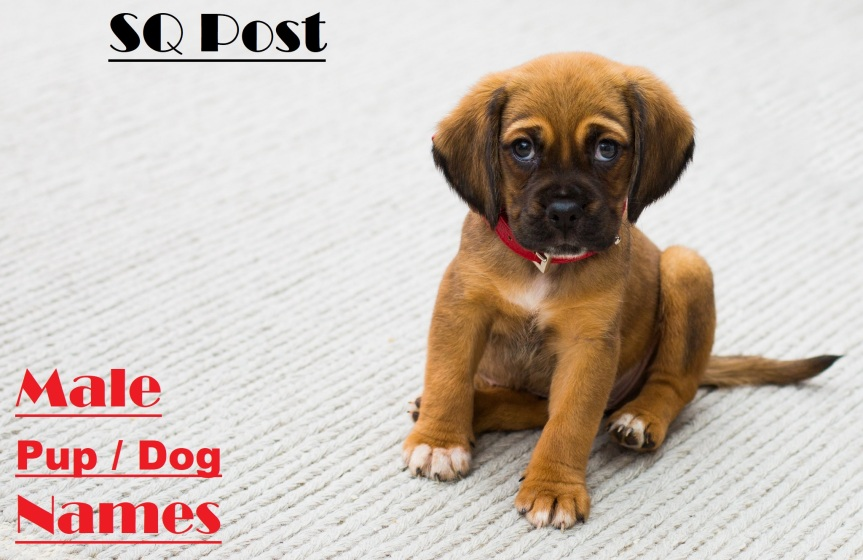 100 Male Puppy / Dog Names