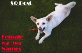 White dog on grass with stick in mouth