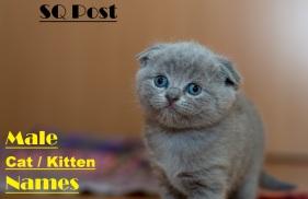 100 Male Kitten / Cat Names Image
