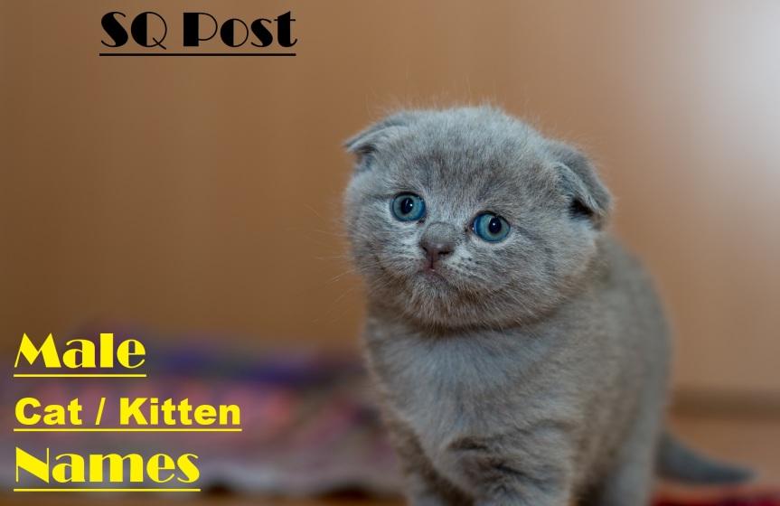 100 Male Kitten / Cat Names