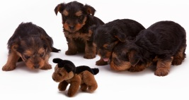 4 Pups and 1 Teddy