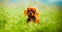 Brown Dog On Grass