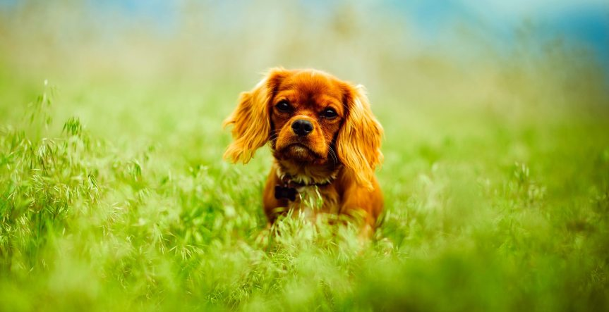Brown Dog On Grass