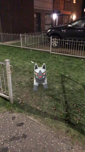 Caught Some New Gen 3 Pokémon Poochyena 2