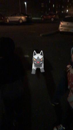 Caught Some New Gen 3 Pokémon Poochyena 3