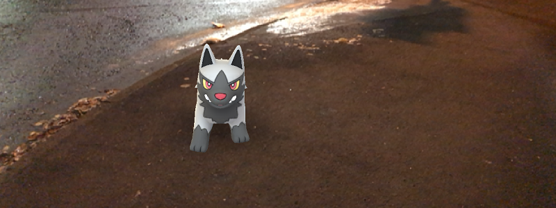Caught Some New Gen 3 Pokémon Poochyena Wide