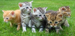 Four Kittens Sitting Together