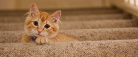 Orange Cat on stairs