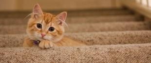 Orange Cat on stairs