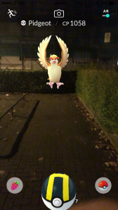 Pokémon Go Hunting At Night Capturing Pidgeot