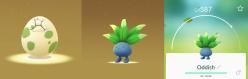 2km Pokémon Go Egg Hatch Oddish