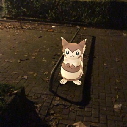 Pokémon Go Hunting At Night Furret