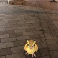 Pokémon Go Hunting At Night Pidgey