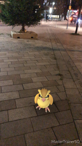 Pokémon Go Hunting At Night Pidgey