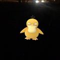 Pokémon Go Hunting At Night Psyduck Caught 2