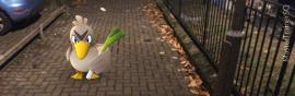 Pokemon Go Species Farfetch'd On The Street