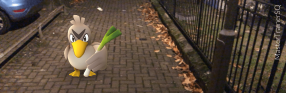 Pokemon Go Species Farfetch'd On The Street