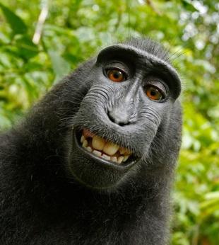 Funny Black Monkey Face