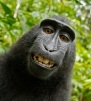 Funny Black Monkey Face
