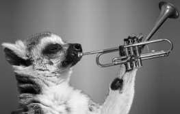 Raccoon Playing A Trumpet